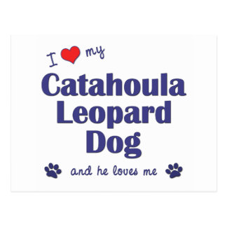 I Love My Catahoula Leopard Dog (Male Dog) Postcard