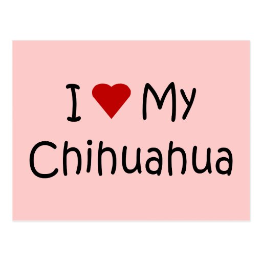 I Love My Chihuahua Dog Breed Lover Gifts Post Cards
