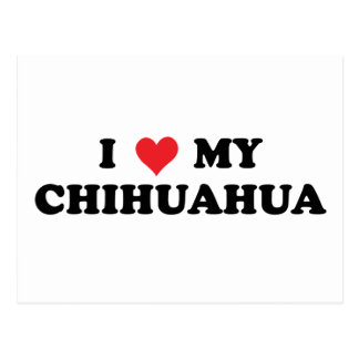 I Love My Chihuahua Postcard