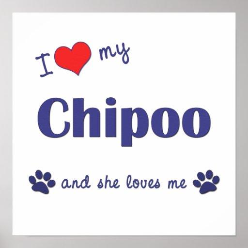 I Love My Chipoo (Female Dog) Poster Print