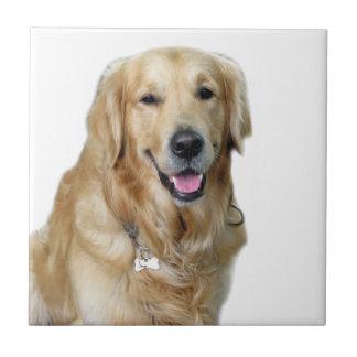 I love my dog peace calm joy tiles