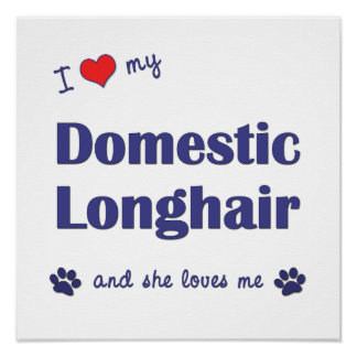 I Love My Domestic Longhair Female Cat Posters