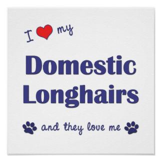 I Love My Domestic Longhairs (Multiple Cats) Posters