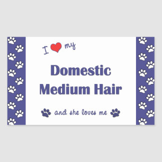 I Love My Domestic Medium Hair (Female Cat)