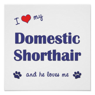 I Love My Domestic Shorthair (Male Cat) Poster