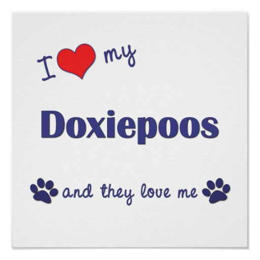 I Love My Doxiepoos (Multiple Dog) Poster Print