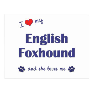 I Love My English Foxhound (Female Dog) Postcard