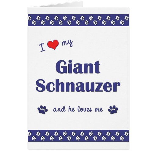 I Love My Giant Schnauzer (Male Dog) Greeting Cards