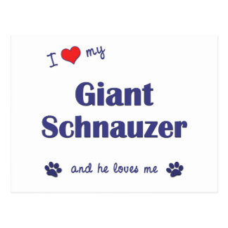 I Love My Giant Schnauzer Male Dog Postcards