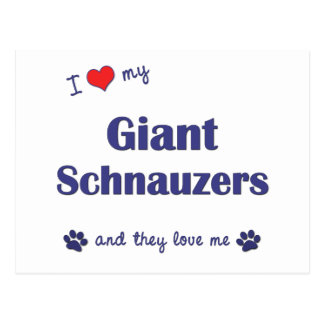 I Love My Giant Schnauzers Multiple Dogs Post Cards