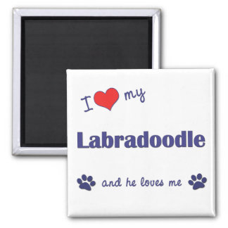 I Love My Labradoodle (Male Dog) Fridge Magnet