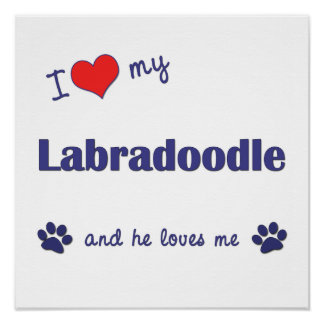 I Love My Labradoodle (Male Dog) Poster Print