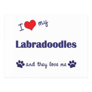 I Love My Labradoodles (Multiple Dogs) Postcard