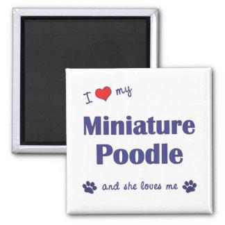 I Love My Miniature Poodle (Female Dog) Square Magnet
