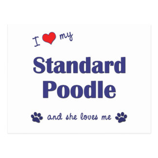 I Love My Standard Poodle (Female Dog) Postcard