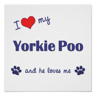I Love My Yorkie Poo (Male Dog) Poster