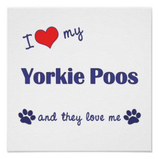 I Love My Yorkie Poos (Multiple Dogs) Poster
