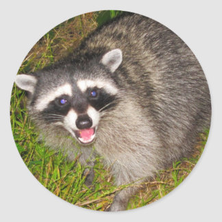I Love Raccoons! Classic Round Sticker