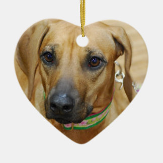 I Love Rhodesian Ridgebacks Ornaments