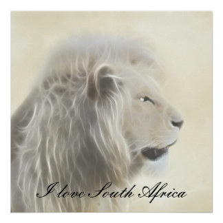 I love South Africa white lion Poster