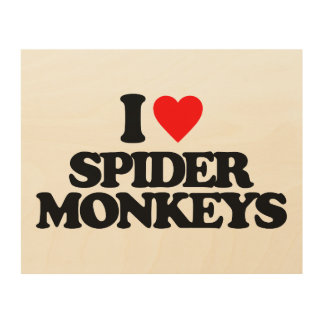 I LOVE SPIDER MONKEYS WOOD CANVASES