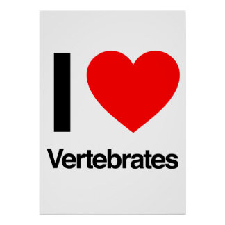 i love vertebrates posters