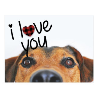 I Love You Photo Postcard