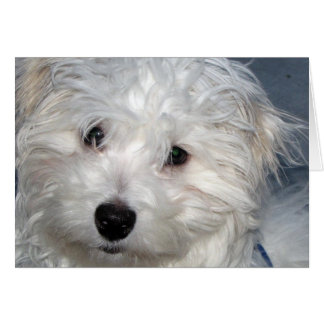 I Love You Puppy Greeting Card