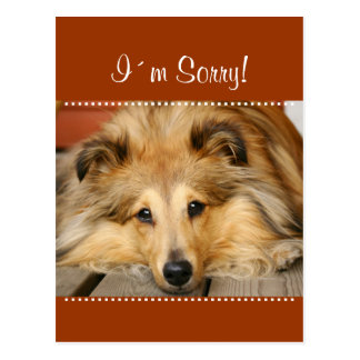 I´m Sorry postcard