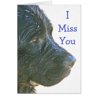 """I Miss You"" Beautiful,Sad-looking Newfie Dog Card"