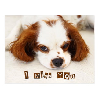 I Miss You - Cavalier King Charles Spaniel Postcard