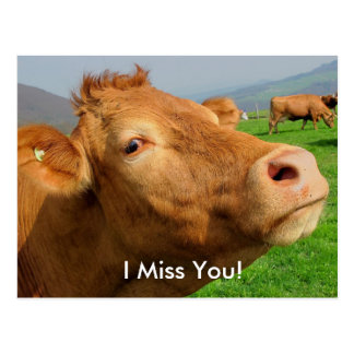 """""""I Miss You"""" Funny Cow postcard"""
