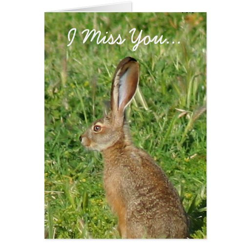 I Miss You Jack Rabbit Greeting Card