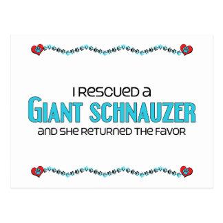 I Rescued a Giant Schnauzer (Female Dog) Post Card
