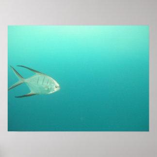 I swim alone poster