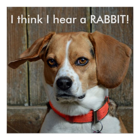I think I hear a RABBIT! Beagle Poster