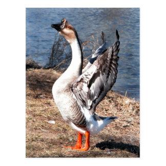 I Want to an Eagle! Postcard