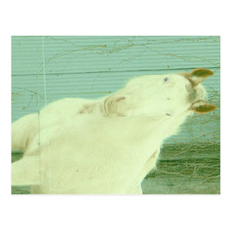 I want to be a unicorn postcard