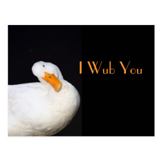 I Wub You, Cute White Duck Postcard