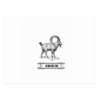 ibex fancy curl postcard
