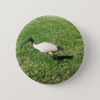 Ibis 2 Inch Round Button
