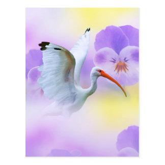 Ibis and Pansy Postcard