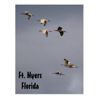 Ibis in Flight postcard