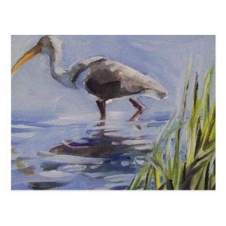 Ibis in Grassy Marsh Postcard