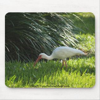 Ibis in the Park Mouse Pad