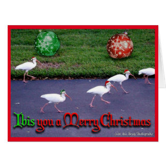 Ibis You a Merry Christmas Card