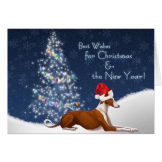 Ibizan Hound Christmas Card