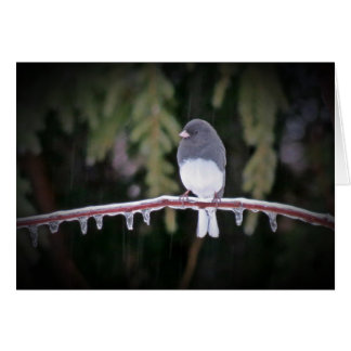 Ice Balance - Junco Bird Card