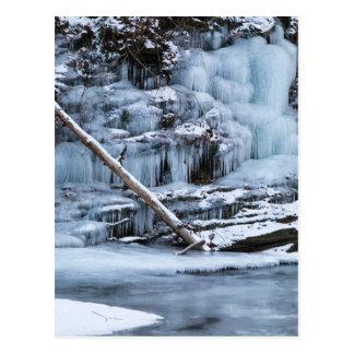 Ice Covered Creek Bank Postcard