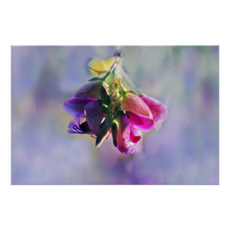 Ice cream bush flowers and meaning print